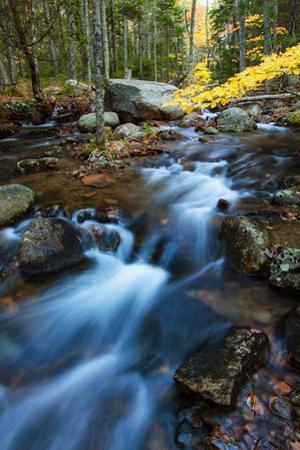 Autumn Flow at Jordan Stream Acadia Maine Mount Desert by Vincent James