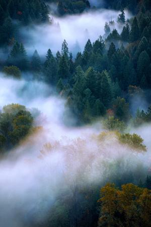 Autumn Fog Dream Sandy Oregon Mount Hood PDX Wilderness Natural by Vincent James