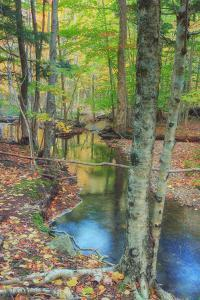 Autumn Forest Stream, Acadia National Park by Vincent James