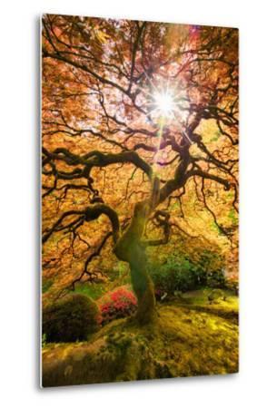 Autumn Maple and Sun, Japanese Garden Portland Oregon