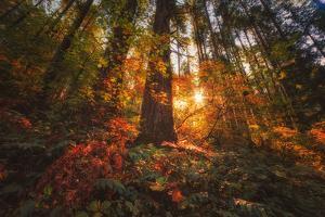 Autumn Power, Colombia River Gorge, Hood River, Oregon by Vincent James