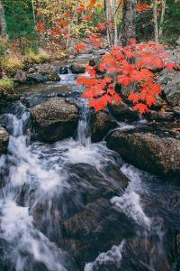 Autumn Stream at Acadia National Park, Maine by Vincent James