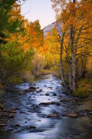 Autumn Stream Magic Bishop Canyon Creek, Sierras California by Vincent James