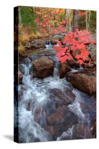 Autumn Stream Through Acadia by Vincent James