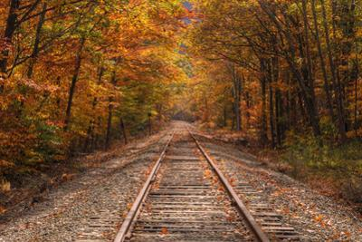Autumn Tracks into Fall, Bartlett, New Hampshire by Vincent James