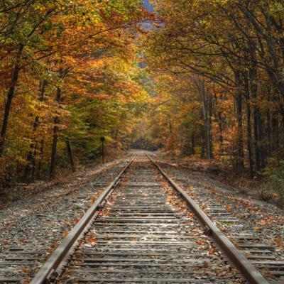 Autumn Tracks (Square), New Hampshire by Vincent James