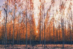 Autumn Tree Landscapes Boardman, Oregon by Vincent James