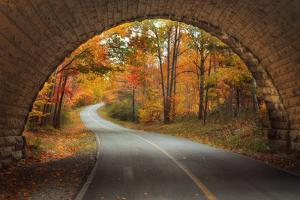 Autumn Tunnel Vision by Vincent James
