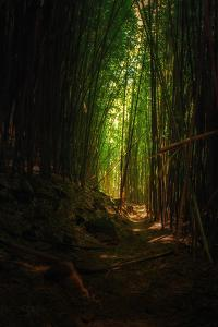 Bamboo Path Maui Road to Hana Hawaii Tropical Forest by Vincent James
