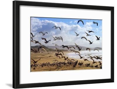 Beach Birds, Half Moon Bay, California Coast
