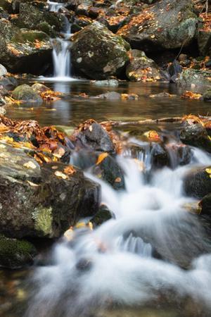 Beaver Creek Cascades, New Hampshire by Vincent James