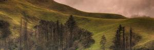 Big Sur Hillside Serenade by Vincent James