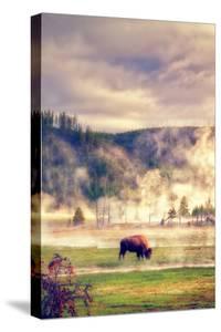 Bison in the Mist by Vincent James