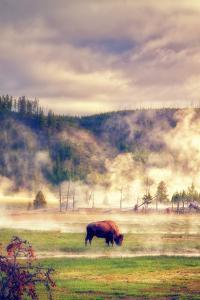 Bison in the Mist by Vincent James