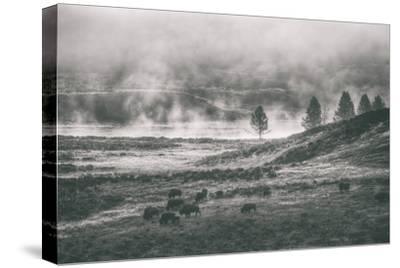 Bison Mist Landscape, Hayden Valley Yellowstone