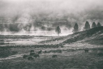 Bison Mist Landscape, Hayden Valley Yellowstone by Vincent James