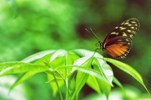 Butterfly Works by Vincent James