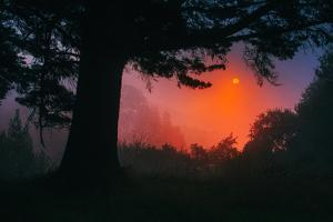 Candy Sunrise and Mist,  Through the Trees, Oakland California by Vincent James