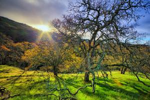Christmas Morning Light at Mount Diablo, San Francisco Bay Area by Vincent James