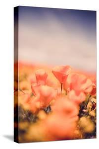 Classic Vintage Poppy Retro Design Wildflower Spring California by Vincent James
