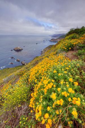 Coastal Flowerscape, Carmel by Vincent James