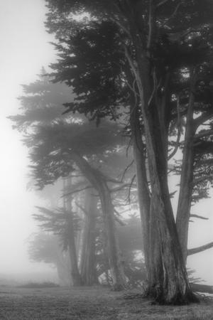Coastal Trees by Vincent James