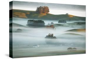 Country Hills in Fog Mist & Light Petaluma Sonoma California by Vincent James