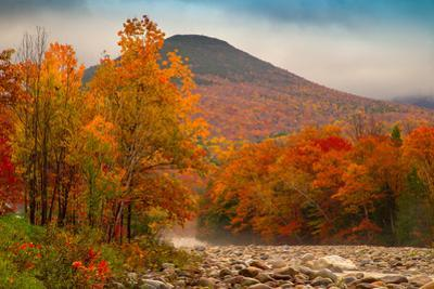 Crazy Autumn Color, White Mountains New Hampshire New England by Vincent James