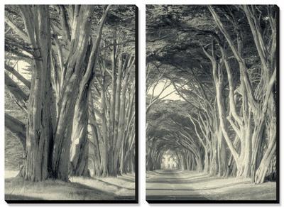 Cypress Tree Road, Point Reyes