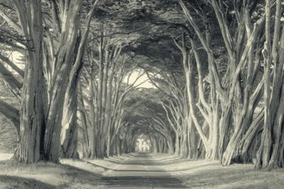 Cypress Tree Road, Point Reyes by Vincent James