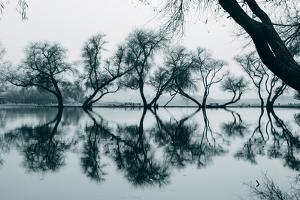 Dancing Trees in Reflection, Marin County, Northern California by Vincent James