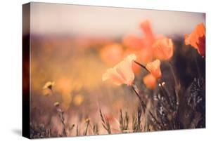 Detail Vintage Poppy Retro Design Wildflower Spring California by Vincent James