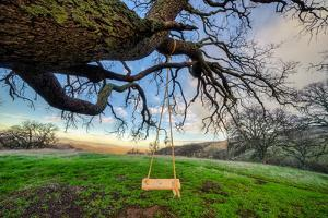 Diablo Swing and Winter Hills, Mount Diablo, Contra Costa California Oak by Vincent James