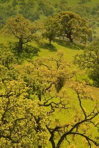 Diablo Trees by Vincent James