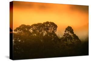 Dramatic Golden Light Design Oakland Hills Eucalyptus Trees by Vincent James