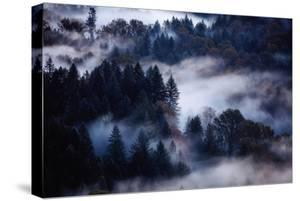 Dream of Fog & Autumn Trees Mount Hood Sandy Oregon PNW Pacific Northwest by Vincent James