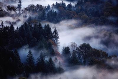 Dream of Fog & Autumn Trees Mount Hood Sandy Oregon PNW Pacific Northwest by Vincent James