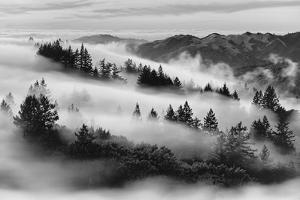 Dreamland, Black and White, Fog at Mount Tamalpais, Marin, Bay Area San Francisco by Vincent James