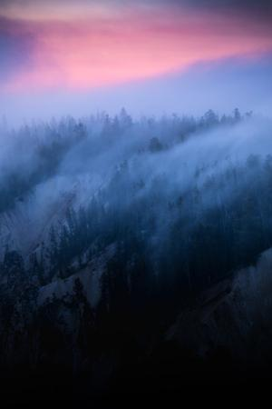 Dreamy Fog Flow & Sunrise Glow Trees Canyon Yellowstone Wyoming by Vincent James