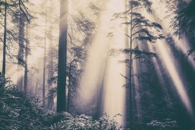 Dvine Light Beams in the Del Norte Coast Redwoods California State Parks by Vincent James