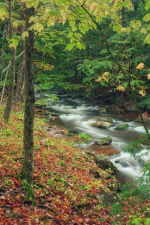 Early Fall Stream, Catskills by Vincent James