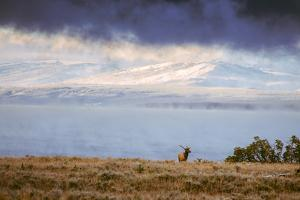 Elk at The Continental Divide, Yellowstone Lake, Wyoming by Vincent James