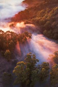 Emergence Fog and Light, Oakland Hills, California by Vincent James