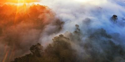 Emergence Fog Trees & Morning Light Above the Oakland Hills by Vincent James