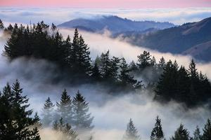 Ethereal Fog and Mount Tamalpais Marin San Francisco by Vincent James