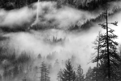 Ethereal Fog & Bridalveil Falls Yosemite Valley Black White by Vincent James