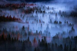 Ethereal Mesmer Fog & Light Trees Sark Yosemite Winter Storm Valley by Vincent James