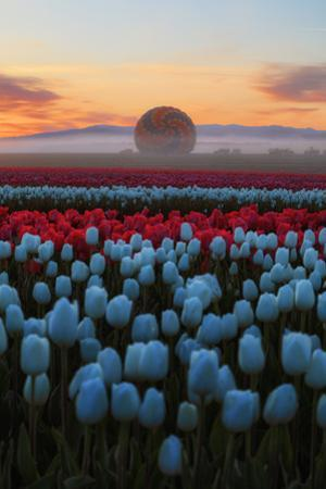 Ethereal Moment in Spring, Tulips Wildflowers & Morning Mist Oregon Pacific Northwest by Vincent James