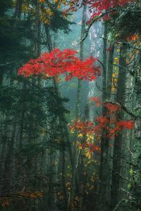 Fall Color In The Mist, Maine, Acadia National Park by Vincent James