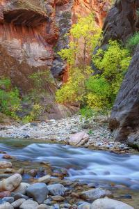 Fall Color in the Virgin Narrows by Vincent James